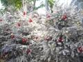 Vánoční výzdoba v Nice